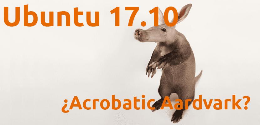 Acrobatic Aardvark