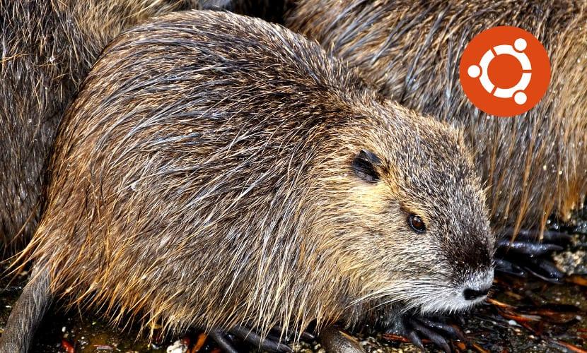 Bionic Beaver, la nueva mascota de Ubuntu 18.04