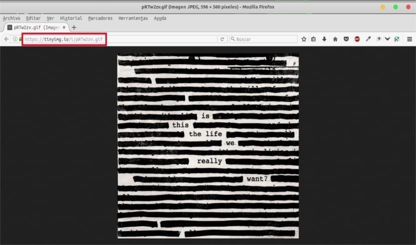 anypaste archivo gif en navegador